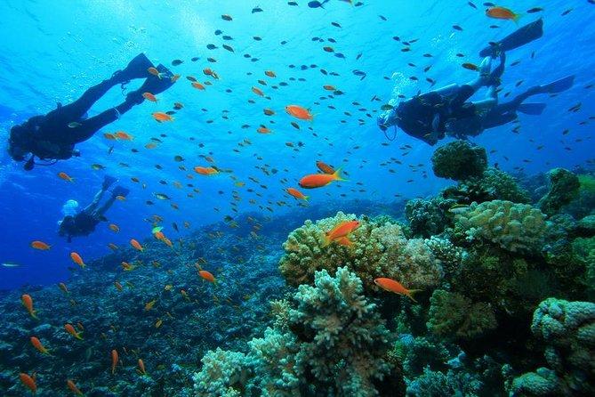 3 Day Signature Zanzibar Snorkelling Adventure