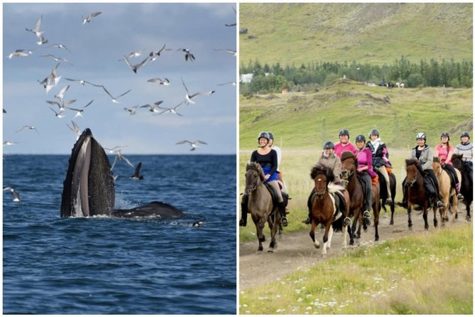 Icelandic Horse Riding and Whale Watching Cruise from Reykjavík