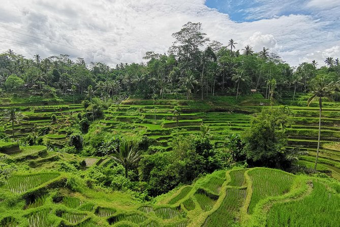 All included waterfall, Bali jungle swing and Ubud tour
