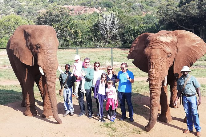 Elephant Walk Guided Tour from Johannesburg R2150 Private photo 6