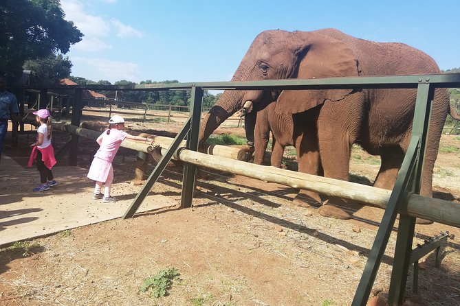 Elephant Walk Guided Tour from Johannesburg R2150 Private photo 3