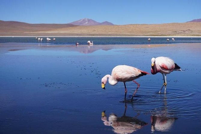 14 Day Private Tour Machu Picchu, Titicaca Lake And Uyuni Salar photo 19