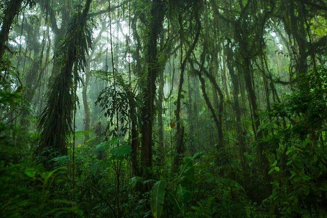 Walk in Monteverde Cloud Forest Plus Horseback Riding