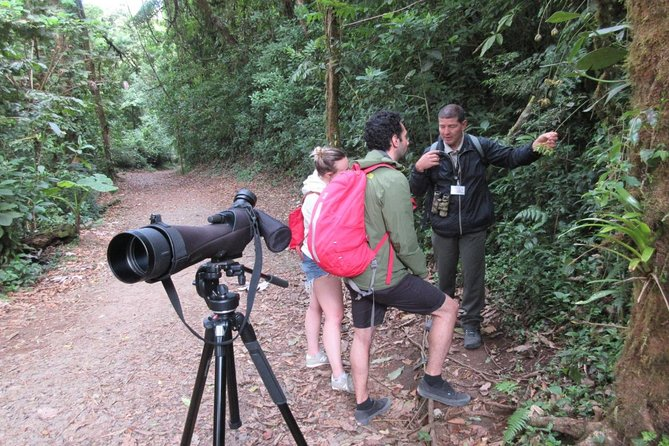Walk in Santa Elena Cloud Forest Reserve
