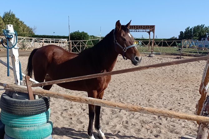 Horse Riding Hurghada1 Hour ( Desert )