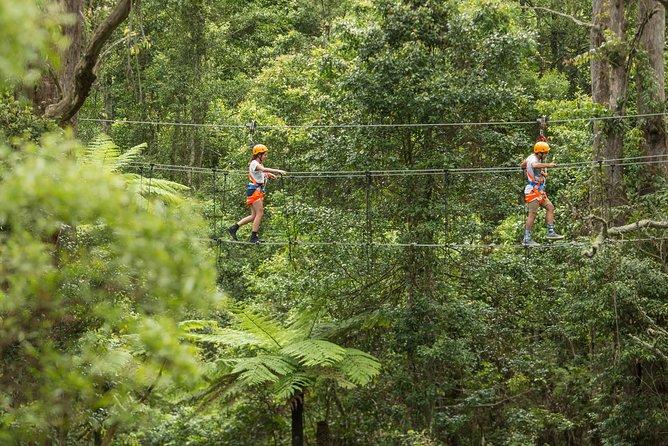 Illawarra Fly Treetop Adventures Admission Including Zipline Tour