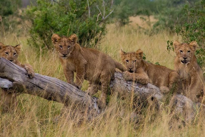 12 days Ultimate Uganda safari