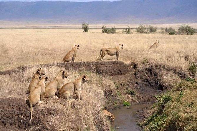 Classic Highlights Of Kenya And Beach