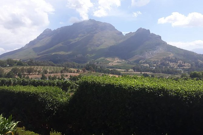 Full Day Wine Tour From Cape Town photo 8