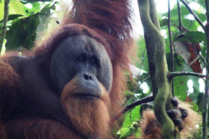 13 DAYS Explore Sumatra MEDAN BUKIT LAWANG LAKE TOBA BUKITTINGGI