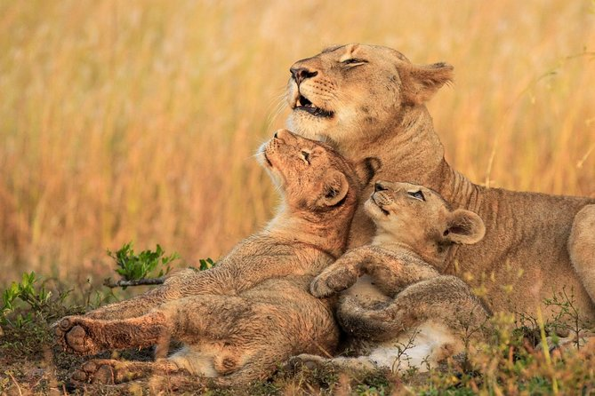 5 days / 4 nights Luxury Safari