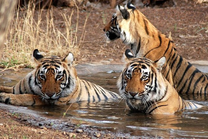 8-Day Private Golden Triangle Tour with a Ranthambore Wildlife Safari