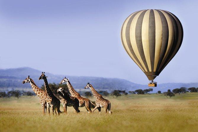Classic Masai Mara Safari