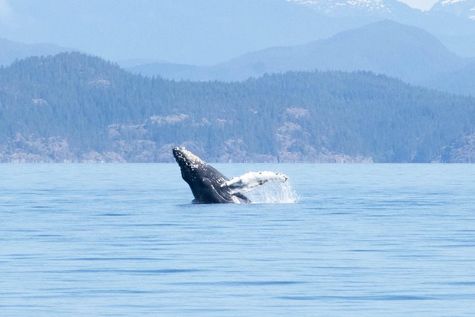 6 Hour Whale Watching