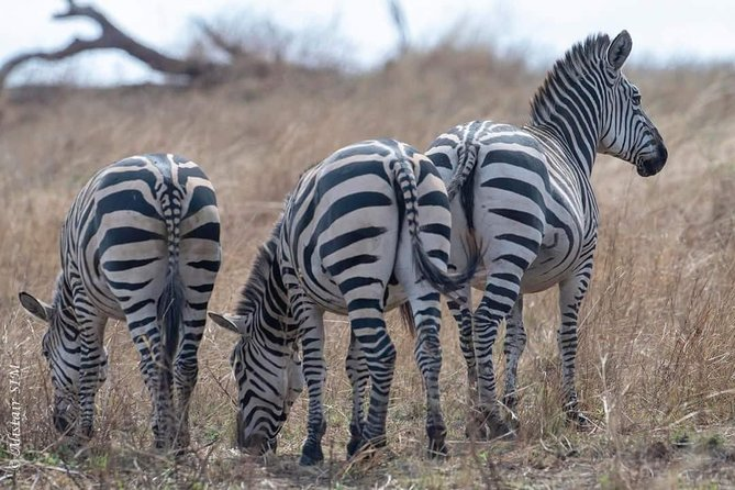 2 Days Unforgettable Safari in Tarangire and Ngorongoro Crater