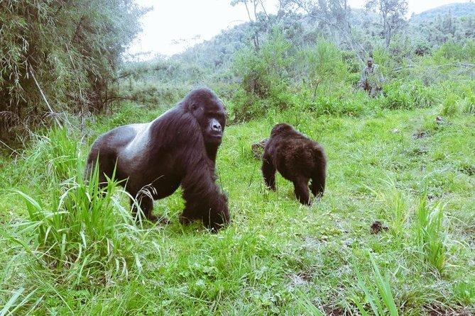 5 Days Rwanda Gorilla Safari & Lake Kivu Splash.