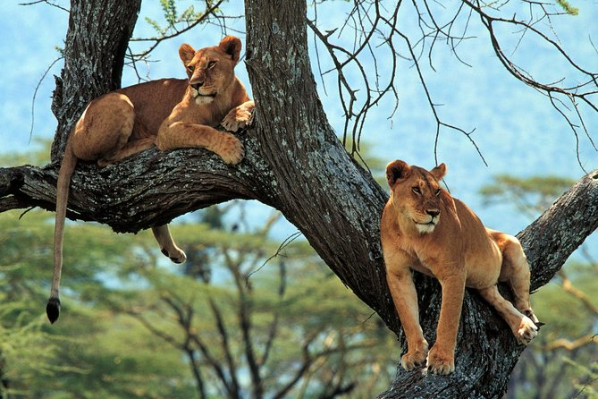 4 Days Tarangire, Serengeti & Ngorongoro Crater Joining Group Safari Tour