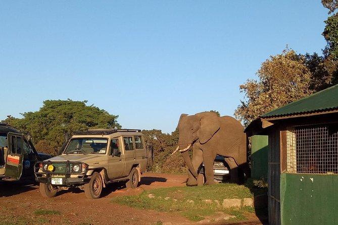 2 Days / 1 Night Tanzania Safari Tour