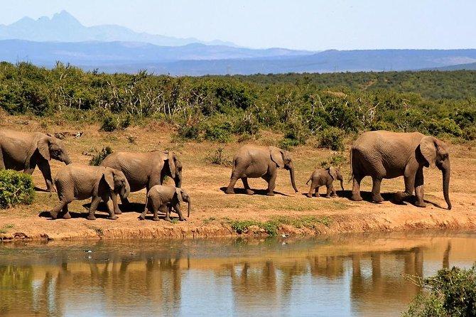 2 Days Tarangire & Ngorongoro Crater Joining Group Safari Tour Tanzania