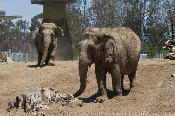 San Diego Zoo with Transportation