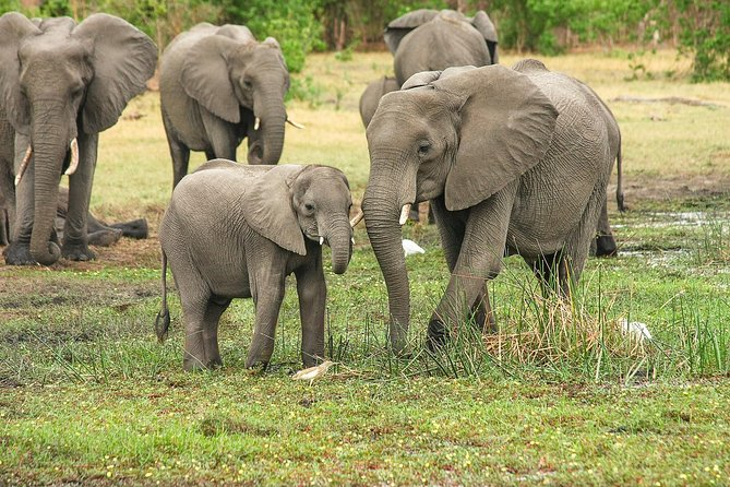 3 Days Tarangire, Manyara & Ngorongoro Joining Group Safari Tour Tanzania