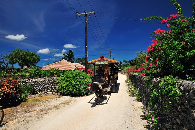 Taketomi Island Water Buffalo Cart & Bike Rental from Ishigaki
