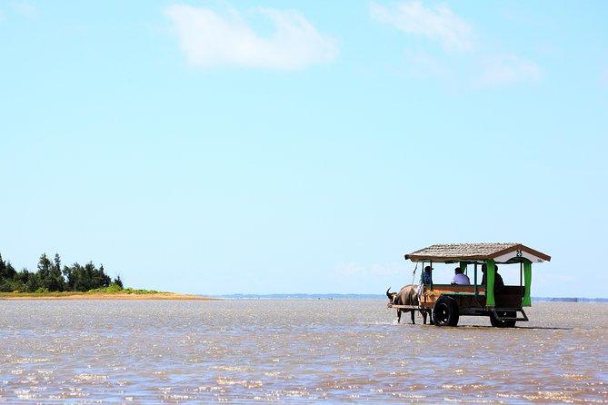 Iriomote Island and Yubu Island Tour