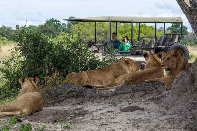 Chobe Full Day Trip From Victoria Falls