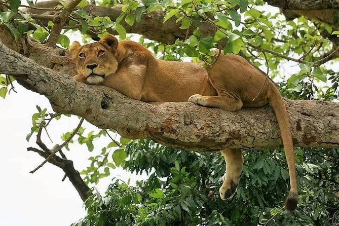 Wildlife & Walking Safari In Uganda 10 Days