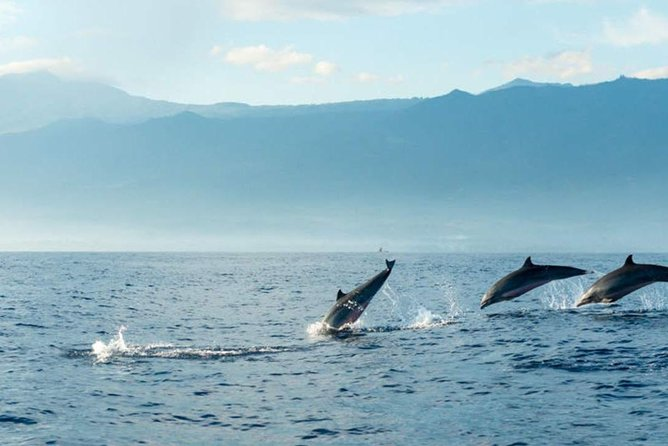 Dolphin Watching Cruise Admission Ticket