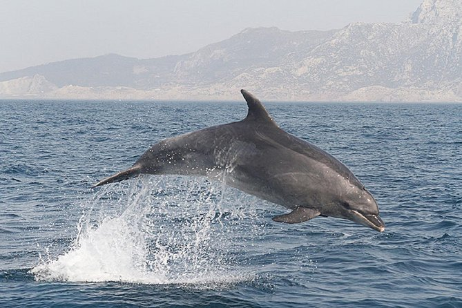 From Seville: Whale Watch Beach Tarifa Day Trip