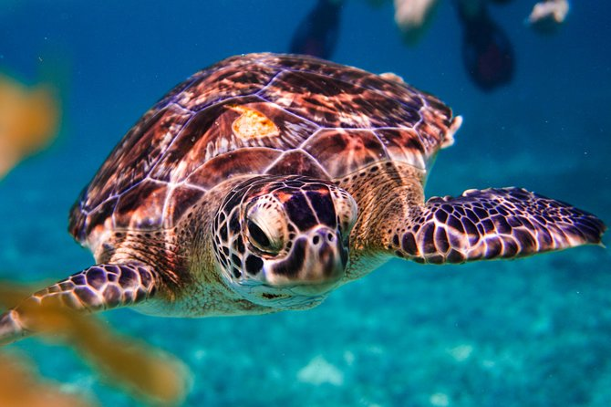 Half day tour - sea turtle and four cenotes - snorkeling from Riviera Maya.