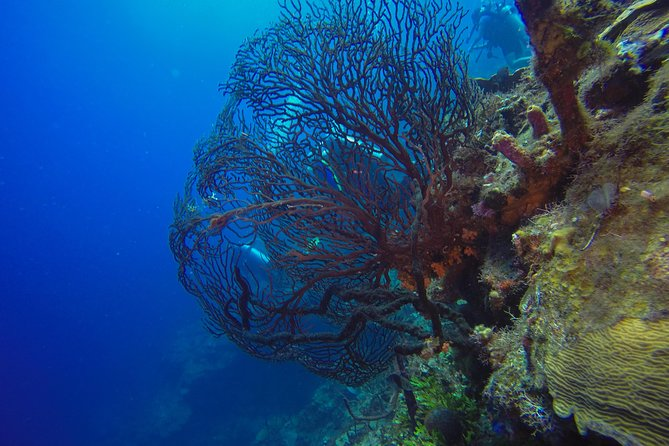 Full-Day Catalina Island Scuba Diving Tour from Punta Cana photo 15