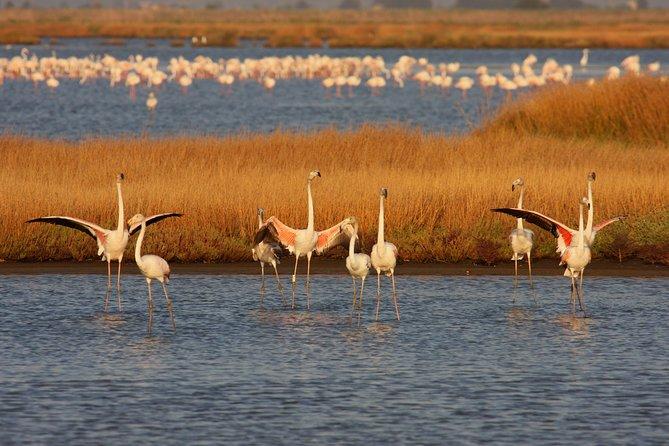 Birdwatching and Photo Tour in Diaccia Botrona