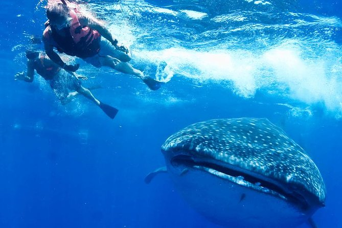 Private Whale shark Ecofriendly tour from Riviera Maya