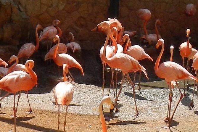 Skip the Line: San Antonio Zoo General Admission Ticket