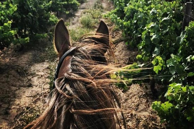 2 Hour Vineyard Trail Ride
