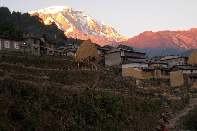 10 Days Annapurna Sikles Village Homestay Hike