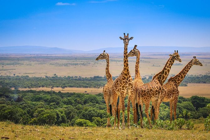4 Days Masai Mara & Lake Nakuru Private Camping Tour Min 2 Pax