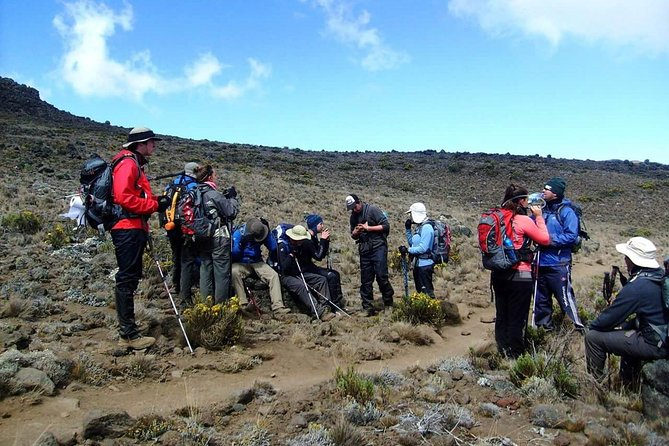 Kilimanjaro Climb Lemosho Route 8 Days 7 Nights photo 4