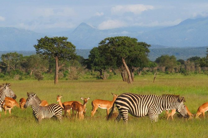 5-Day Mikumi & Ruaha Tanzania Wildlife Lodge Safari