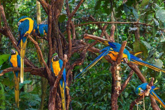 Iguassu Bird Park - Tickets Included