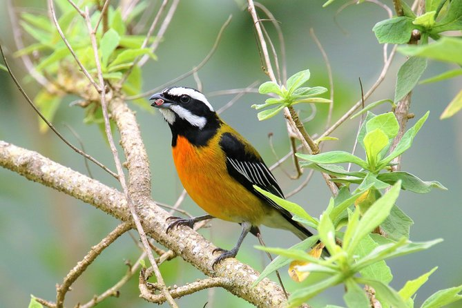 Rocklands Bird Sanctuary and Montego Bay Highlights Tour from Falmouth