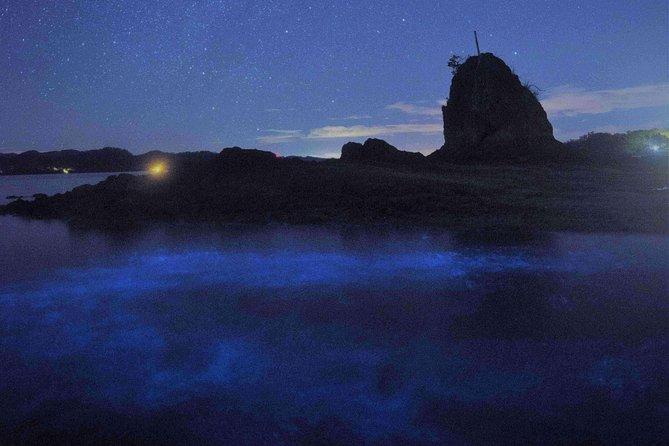 Bioluminescent Kayak Tour