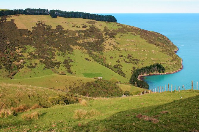 Akaroa and Banks Peninsula Wild Penguins Tour