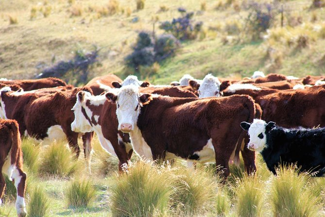 New Zealand Farm & Scenic Day Tour from Christchurch
