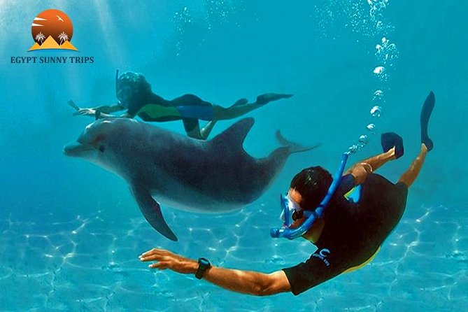 Dolphin House, amazing trip with snorkeling and dolphin watching photo 1