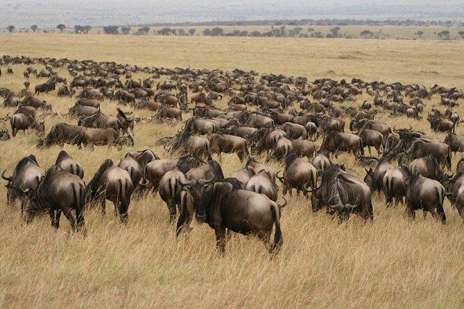 7 Day Northern Serengeti Wildebeest Migration Safari