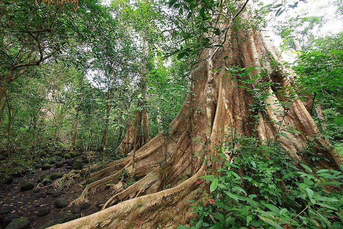 Nam Cat Tien National Park 2-Day Tour with Lodging, Meals, and Pickup