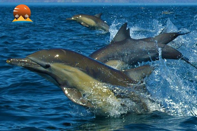 Dolphin House, amazing trip with snorkeling and dolphin watching photo 7